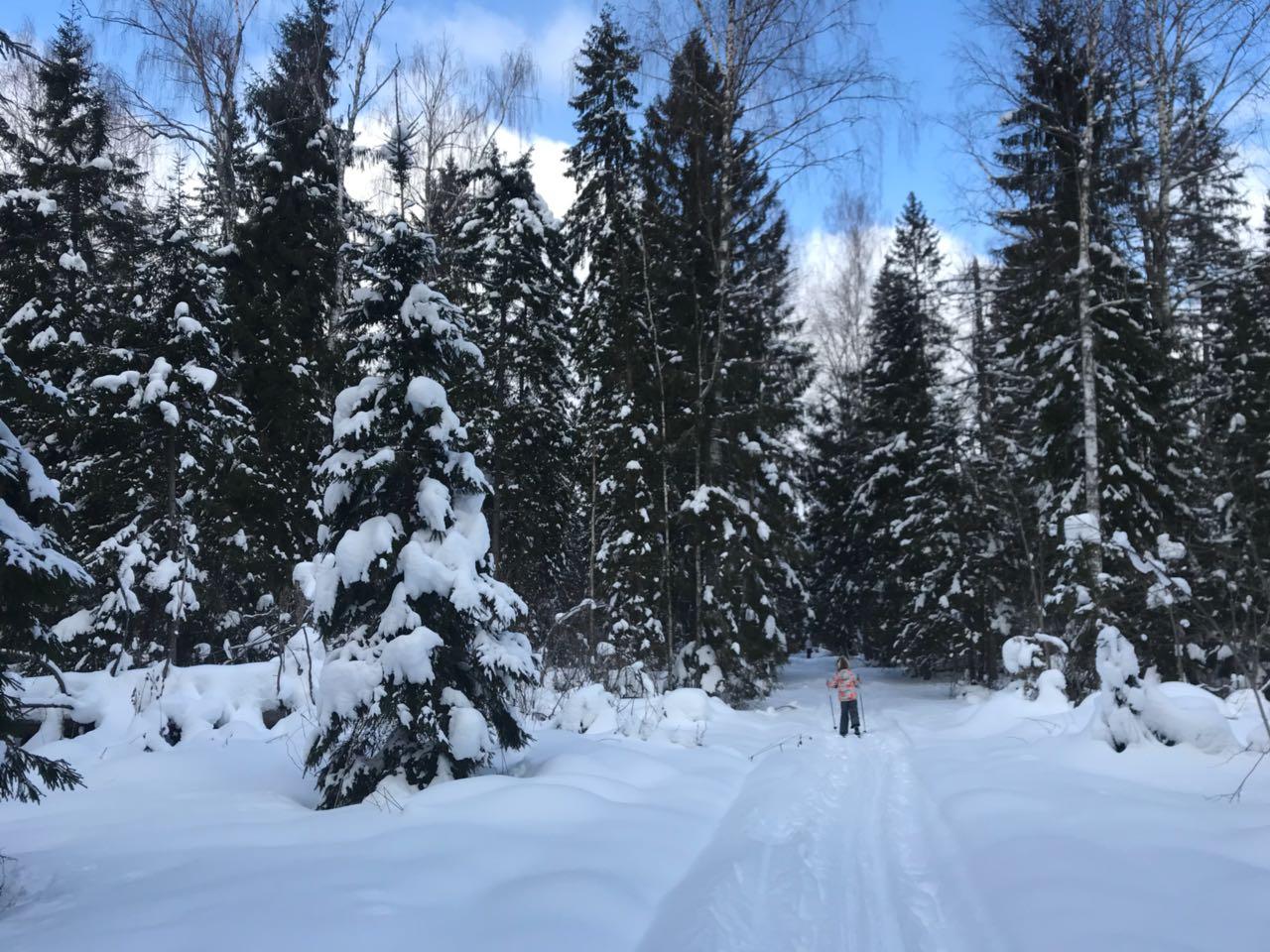 Зима выдалась опять очень снежная